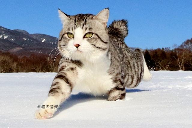雪原を歩く旅猫ニャン吉