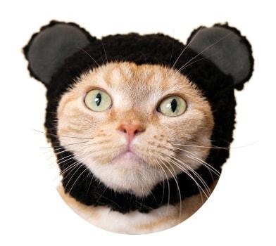 猫用のかぶりもの、クマ×くろ