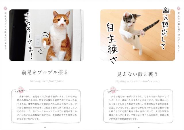 猫が前足を振る仕草を解説 by ねこ語会話帖