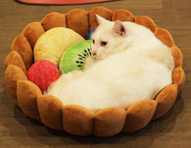 フルーツタルトクッションでくつろぐ猫