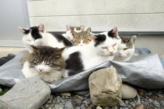 猫島・田代島の猫たち(AC)