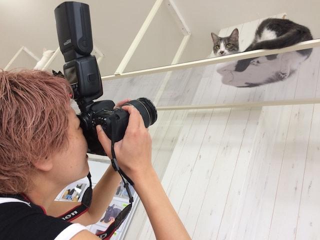 ネコを撮影する芳澤ルミ子さん