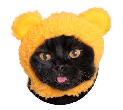猫用のかぶりもの、クマ×きいろ