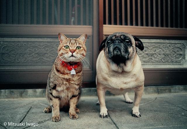 ネコとイヌの仲良しショット by 岩合光昭