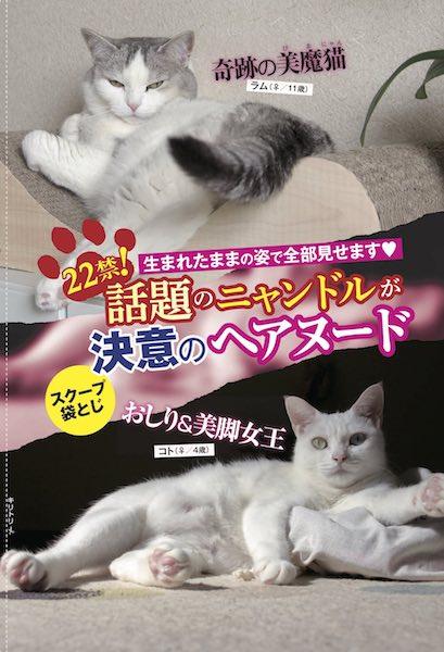話題の猫アイドル by 週ニャン大衆