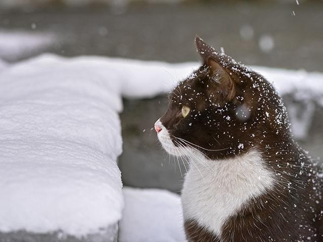 身体に薄っすらと雪が積もる猫の写真 by 吉田裕吏洋