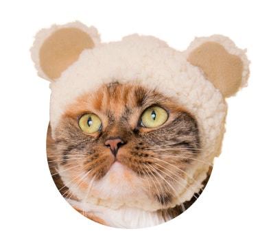 猫用のかぶりもの、クマ×ベージュ