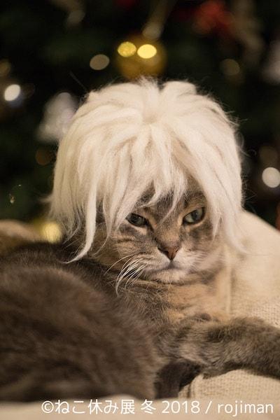 猫毛のカツラ by rojiman