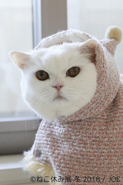 白猫うらちゃん by JOE