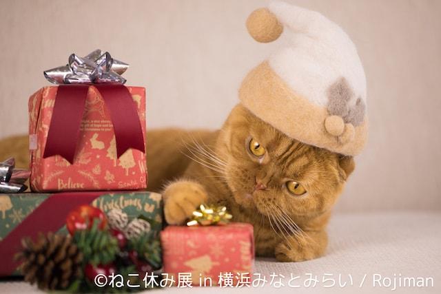 クリスマス帽子を被る猫 by 猫の抜け毛帽子クリエイター「rojiman」