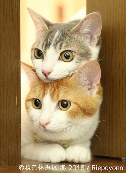 仲良し猫 by Riepoyonn