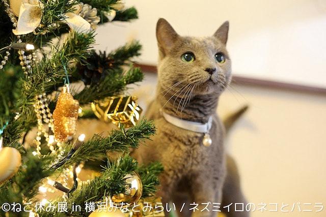 ネズミイロのネコとバニラ、クリスマスバージョン