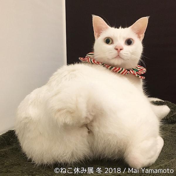 白猫のお尻 by Mai Yamamoto