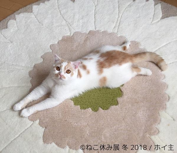 ちくわ柄の猫ホイップ