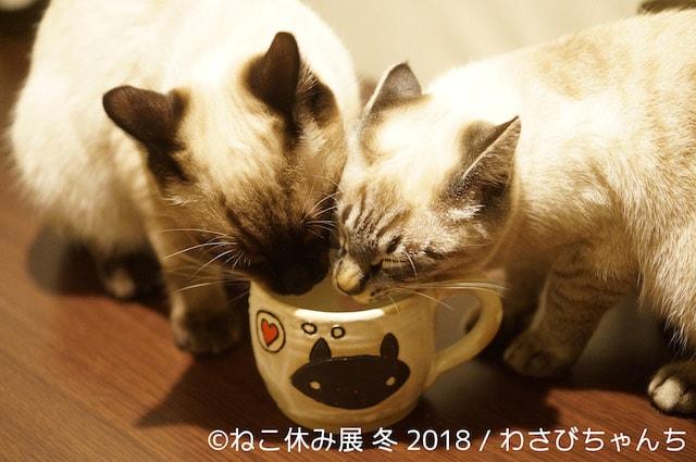 ひとつの器で水を飲む猫たち by わさびちゃんち