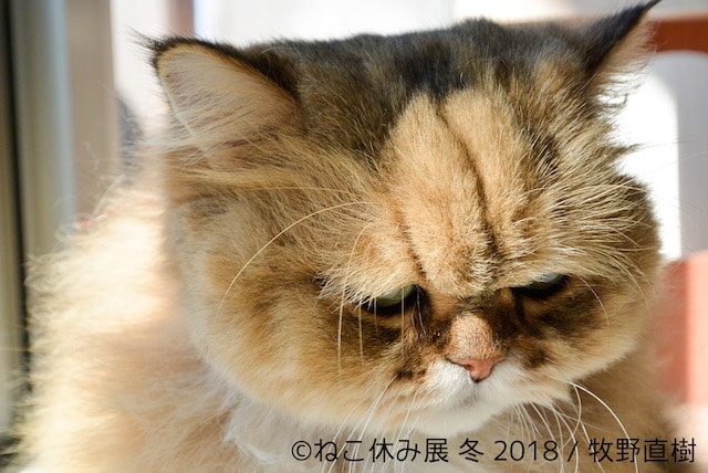 フーちゃん by 牧野直樹