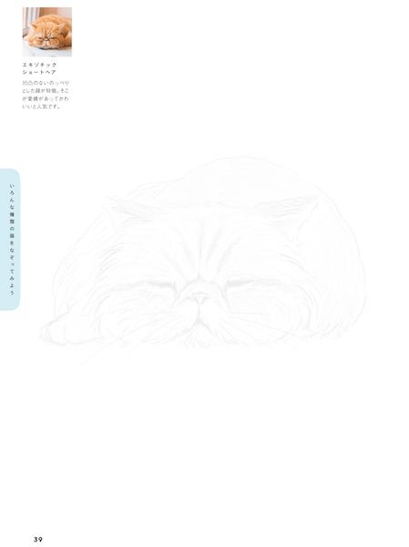 エキゾチックショートヘア by 猫のなぞり絵