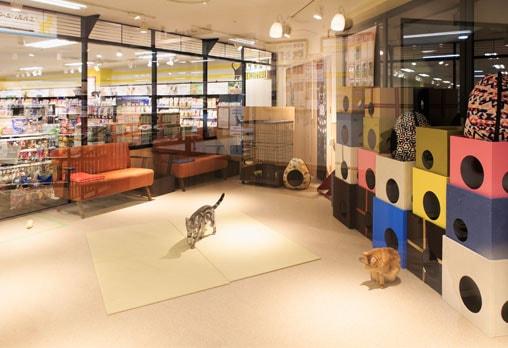 里親募集施設「ネコ・ライフスタイル」の施設イメージ