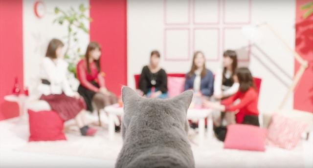 乃木坂46のメンバーたちを見つめる猫