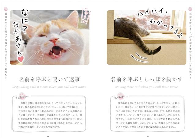 猫の名前を呼ぶとしっぽを動かす行動の意味を解説 by ねこ語会話帖