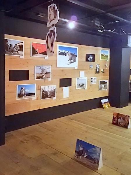 旅猫ニャン吉 写真展の会場イメージ