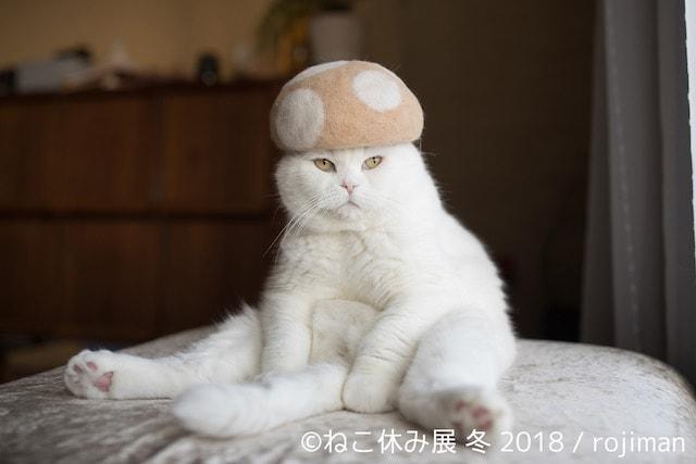 きのこ帽をかぶるネコ by rojiman