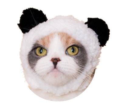 猫用のかぶりもの、パンダ
