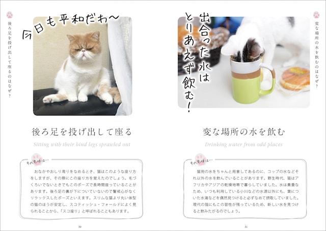 猫が後ろ足を投げ出して座る行動の意味を解説 by ねこ語会話帖