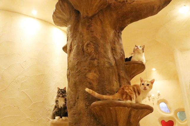 木に登ってくつろぐ猫たち by Cat Cafe てまりのおしろ