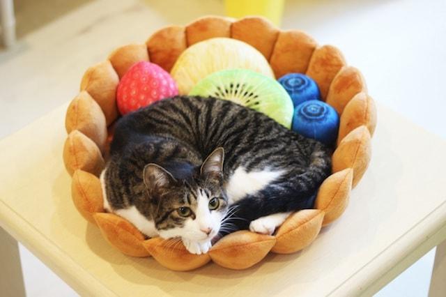フルーツタルト型クッションでくつろぐ、キジシロ猫