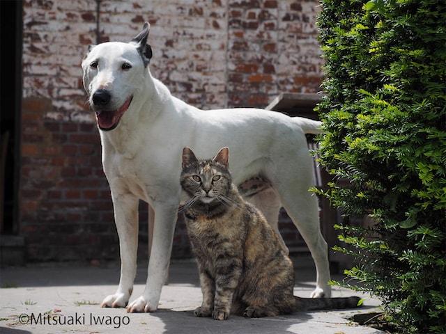 猫と犬の仲良し写真 by 岩合光昭
