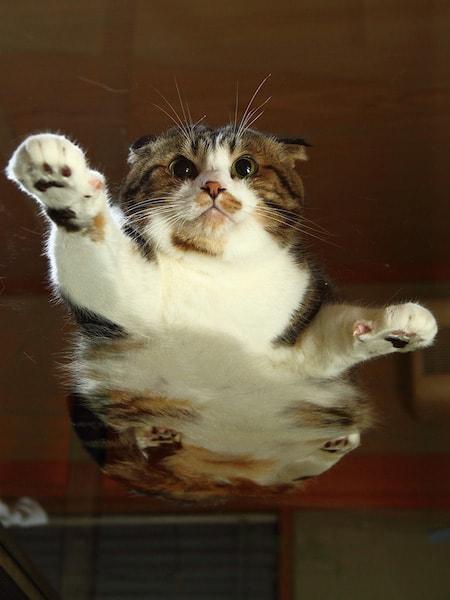 下から見たネコのお腹 by 芳澤ルミ子