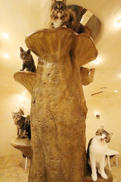 「Cat Cafe てまりのおしろ」の猫スタッフたち