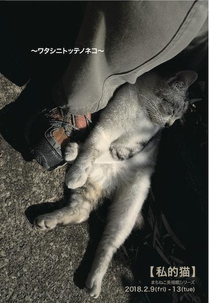 写真展「私的猫 ~ワタシニトッテノネコ~」 in メゾンドネコ(Maison de NEKO)