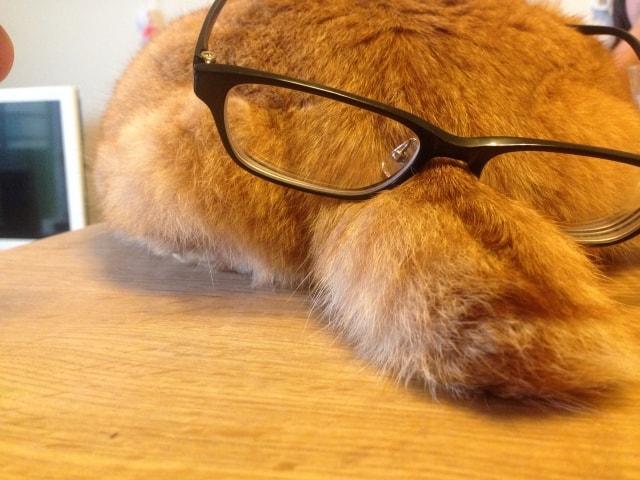 猫のしっぽ(尻尾)イメージ写真ac