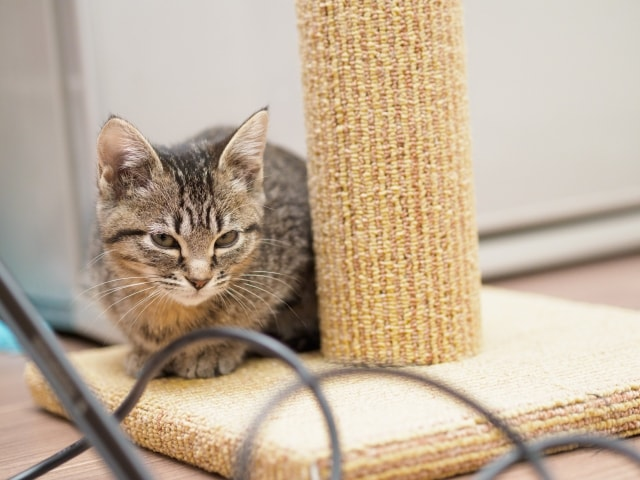 猫とケーブル・コード