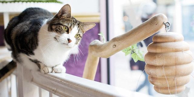 ロンドンの酒場・パブで暮らす猫 by ロンドンのパブねこ