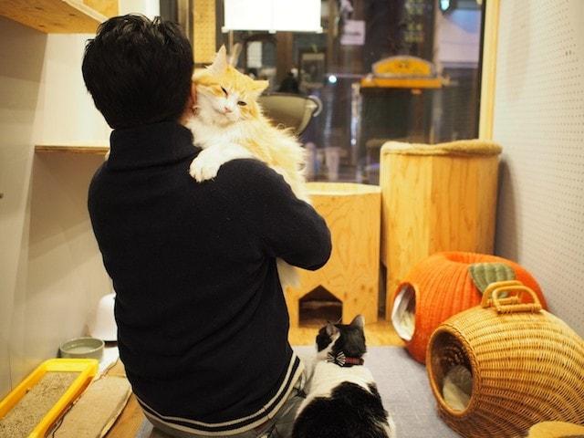 りんご猫(エイズウィルスキャリアの猫)と触れ合う男性客