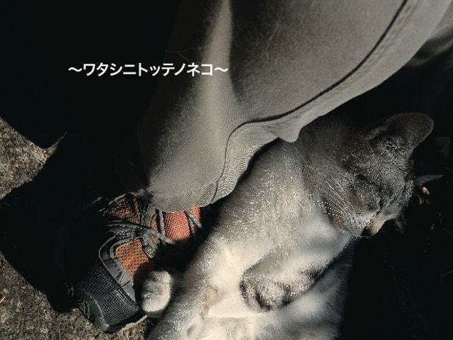 19名の猫写真作家による作品展「私的猫 ~ワタシニトッテノネコ~」