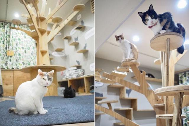 大阪ネコビル・ネコリパブリック大阪心斎橋店3Fの猫と遊べるスペース