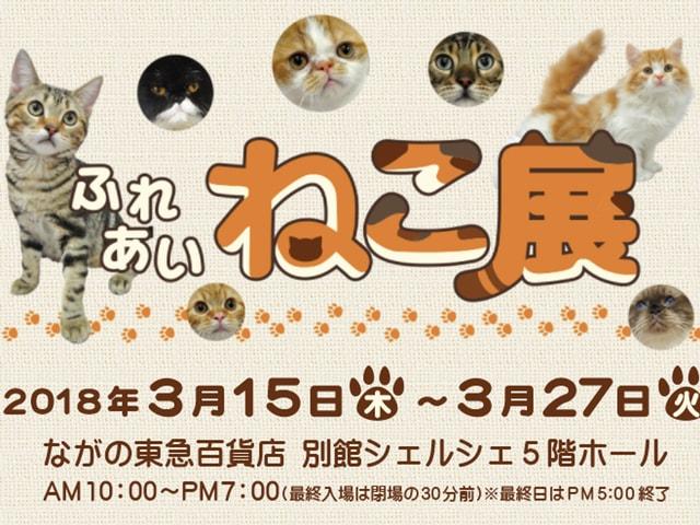 世界中の珍しい猫と触れ合える「ふれあいねこ展」ながの東急百貨店で2018年3月に開催