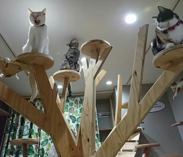 大阪ネコビル・ネコリパブリック大阪心斎橋店3Fにあるキャットタワー