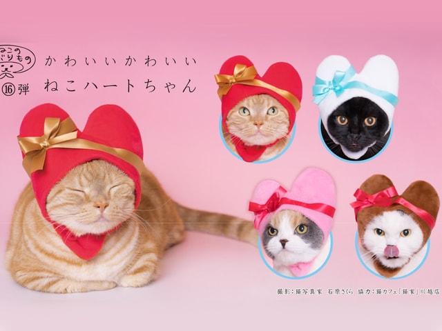 愛猫がラブラブなハート型に変身!かわいい猫のかぶりもの最新作が登場