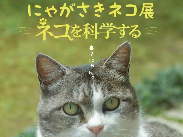 長崎猫の企画展「にゃがさきネコ展 ~ネコを科学する~」