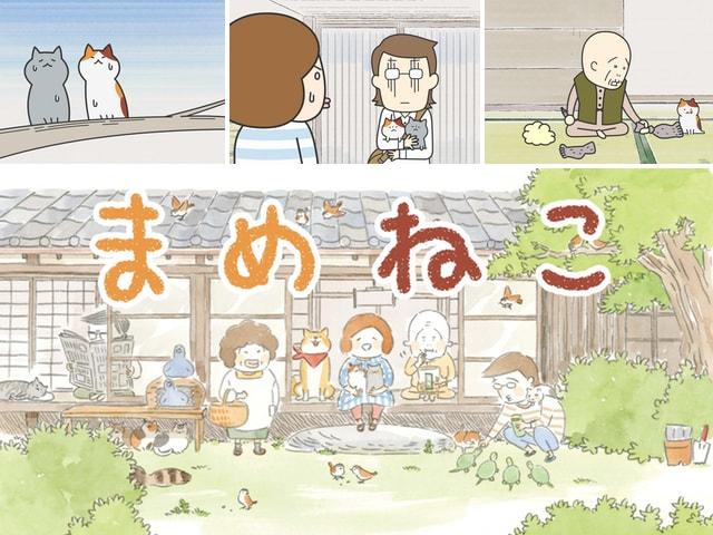 ゆるふわ猫の日常を描いたTVアニメ「まめねこ」1月から放送開始