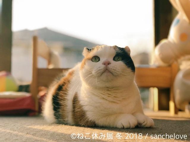 ねこ休み展が詳細発表!作家による愛猫のイラスト化や猫の日限定企画など