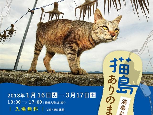 熊本県の猫島で暮らす猫たちの企画展「猫島ありのまま 湯島から」