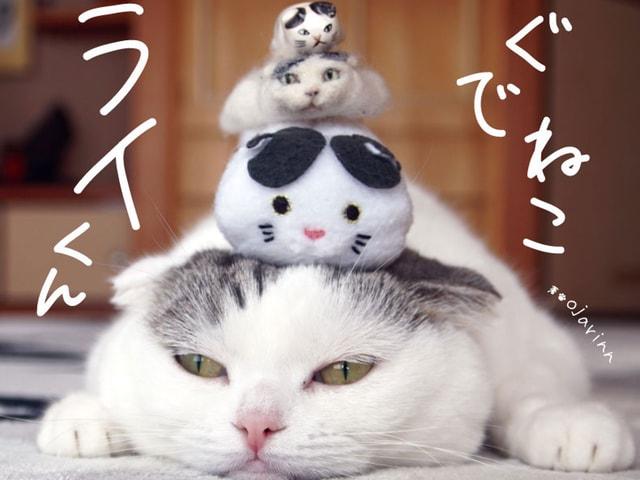 ツムツム姿で大人気♪ 脱力系ネコの写真集「ぐでねこ ライくん」