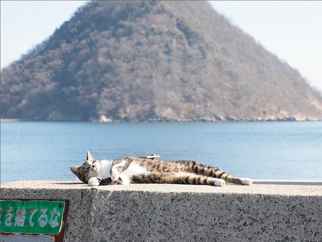 瀬戸内海の猫たちを紹介する猫番組「にゃん旅」のDVD写真集が発売