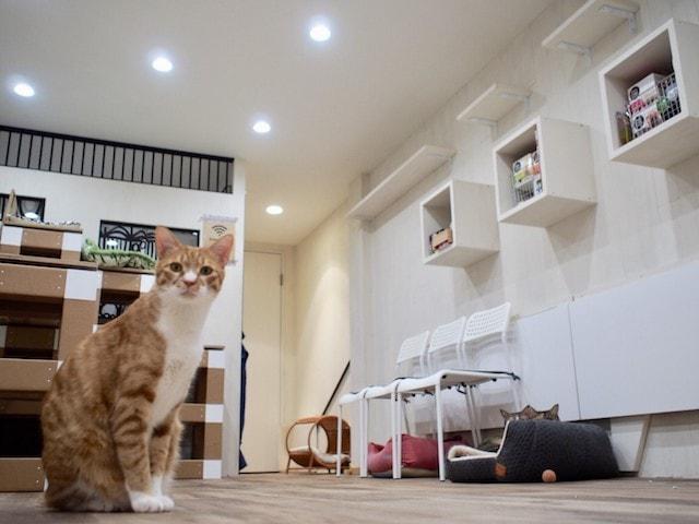 大阪ネコビル・ネコリパブリック大阪心斎橋店5Fにあるネコワーキングスペース